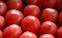 産地直送!!糸島産 絶品トマトはれぞら(4kg入り)