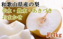 【先行予約】[数量限定]和歌山県産の梨約4kg(品種おまかせ)【2021年8月中旬~発送】