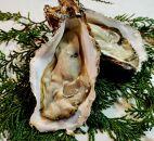 京都久美浜産 殻付き牡蠣