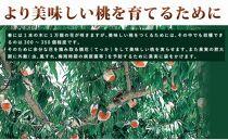 ☆先行予約☆和歌山県産白鳳11~15玉入り≪秀品≫【2021年7月上旬以降発送】