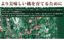 ※受付終了※☆先行予約☆和歌山県産白鳳11~16玉入り≪ご家庭用≫【2021年7月上旬以降発送】