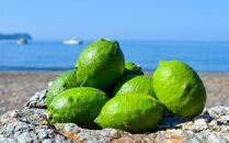 皮まで使える和歌山県産グリーンレモン