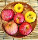 【訳あり・数量限定】田屋果樹園 家庭用りんご10kg