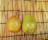 【訳あり・数量限定】田屋果樹園 ご家庭用西洋梨5kg