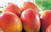 【2021年発送】アップルマンゴー10kg