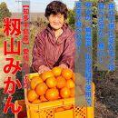 【愛知県知多半島産】皮まで食べれる♪安心の農薬・化学肥料不使用みかん 8kgBox