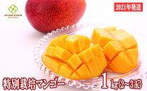【2021年発送】特別栽培アップルマンゴー1kg