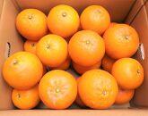 除草剤不使用 完熟たんかん家庭用3キロ