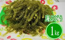 【はごろものまちのグリーンキャビア】海ぶどう(1kg)