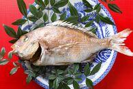 天然真鯛の塩焼き 1尾 ~お祝い・お食い初め等におすすめ~