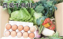 さとの平飼い玉子20個&農薬を使わないで育てた季節の野菜セット
