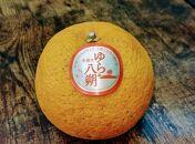 【減農薬栽培】由良八朔10kg(2Lサイズ以上※サイズ選択不可)