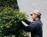 庭木のお手入れ5本パック(5本:1階屋根の高さまで)