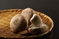 稀少品種 魚沼天恵菇(てんけいこ)使用『山のあわび』3本セット