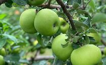 アップルパイ【食べ比べが楽しい8個入】