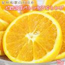 ☆先行予約☆希少な国産バレンシアオレンジ約7kg【ご家庭用訳あり】【2021年6月中旬より発送】