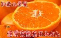 【2022年1月発送】【数量限定】濃厚有田みかん(ご家庭用)たっぷり8.5kg