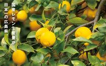 レモンの島からの贈り物