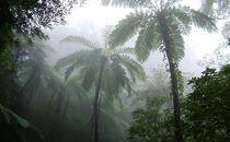 亜熱帯の森 金作原原生林探検ツアー (子ども1名様)