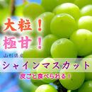 【2021年先行受付】フルーツの里!中山町産シャインマスカット 約1.2kg