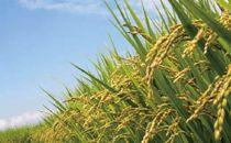 【頒布会】白河浪慢有機栽培米ひとめぼれ<農薬:栽培期間中不使用>5kg(2.5kg×2袋)×12回