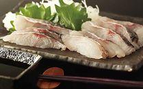 【新鮮が決め手!】アオ鯛(ウンギャルマツ) 1尾