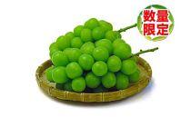 <香川産>シャインマスカット[秀品]どっさり2kgの詰め合わせ