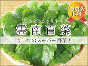 【宮古島産】葉の厚さが違う!宮古島のミネラル土壌で育った雲南百薬1kg!