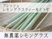 ※一時受付中止※【宮古島産】無農薬栽培レモングラス(生・フレッシュ)2kg
