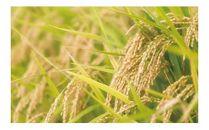 ◆JAうつのみや 宇都宮産 コシヒカリ 食べ比べセット(2種類)
