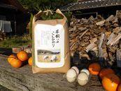 (胚芽米)若草有精卵と無農薬こしひかりの玉子かけ御飯セット