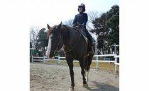 乗馬体験(30分)とドリンク1杯サービス