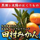 和歌山有田の「高級田村みかん」5kg青秀Sサイズ