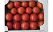 【数量限定】トマト
