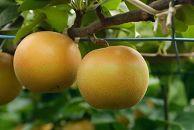 先行予約/健康にいい栄養たっぷりな梨なし/あきづき2kg(4玉~5玉)