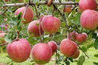 先行予約/食べると思いだす初恋の味りんご/シナノスイート3kg(7玉~8玉)