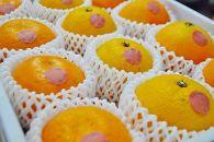 おすすめフレッシュ柑橘3種詰合せ(4kg)