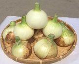淡路島産 伊吹さんちのいい玉ねぎ「有機栽培 新玉ねぎ」3kg