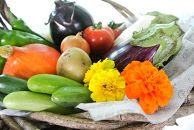 【数量限定100】自然栽培野菜セット(陽だまり)