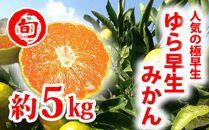ゆら早生5kg 旬の味覚市場 【極早生みかん】