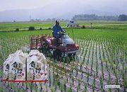 30年産南魚沼産こしひかり玄米5kg(無化学肥料、8割減農薬栽培)