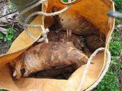 ≪2019年お届け≫和歌山産 朝堀り筍4kg(ぬか付き)品種:孟宗竹