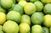 ★1月中旬~2月下旬発送★紀州かつらぎ山のジャバラ果実<完熟>3kg