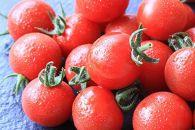 濃い朝採れ超完熟ミニトマトキャロルセブン2kg