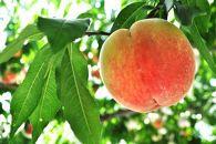 ★特選★<甘い香りと果汁が自慢>桃4kg(9~12玉)