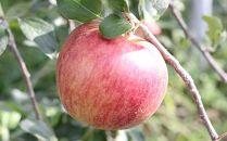 りんご(つがる)約5kg秀