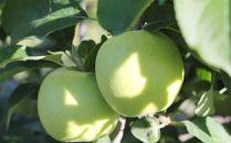 りんご(ゴールド)約5kg秀