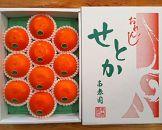 【先行受付・限定20箱】『柑橘の大トロ』ハウスせとか厳選10玉入