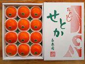 【先行受付・限定30箱】『柑橘の大トロ』ハウスせとか厳選12玉入