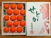 【先行受付・限定10箱】『柑橘の大トロ』ハウスせとか厳選15玉入